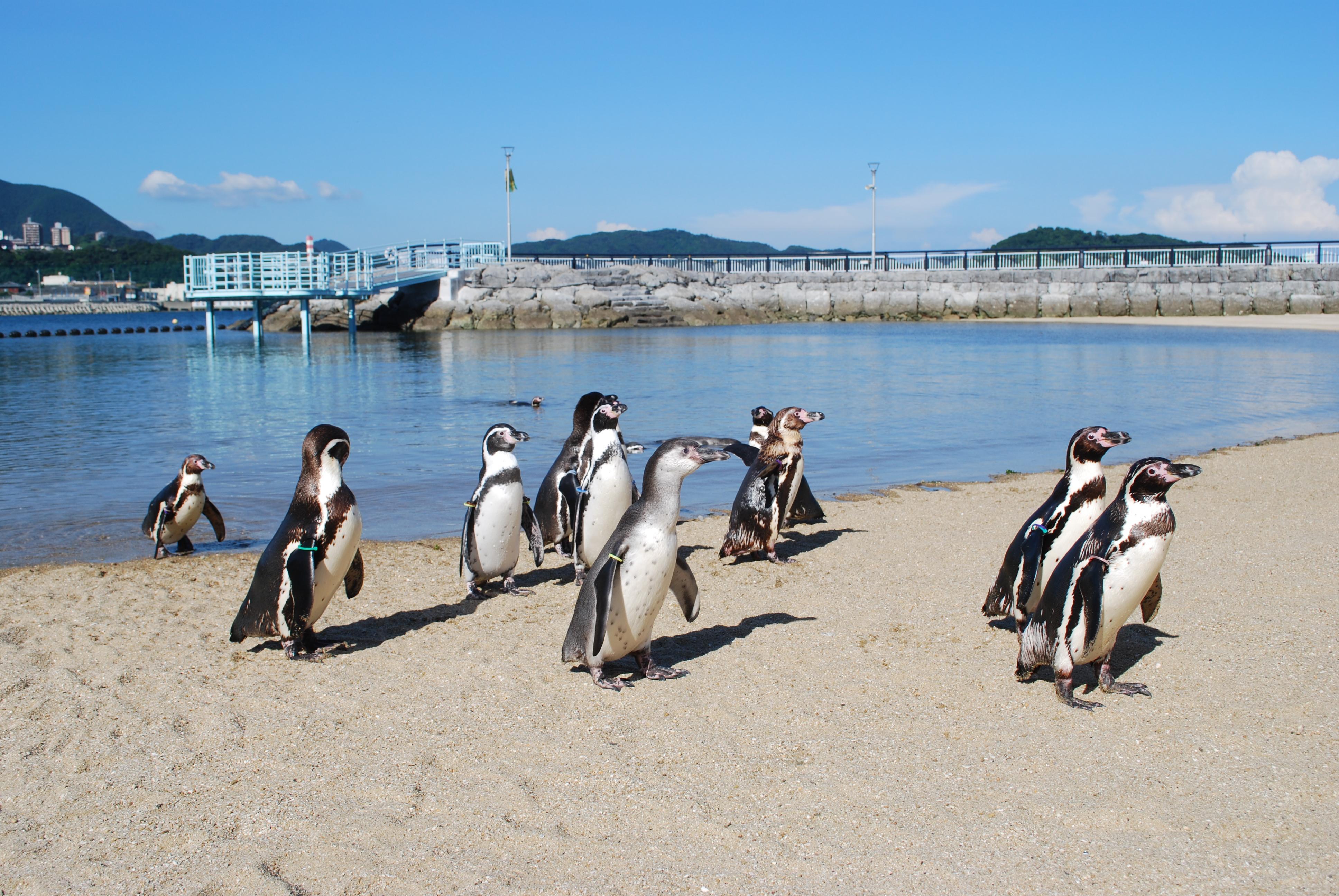 長崎ペンギン水族館のふれあいペンギンビーチ