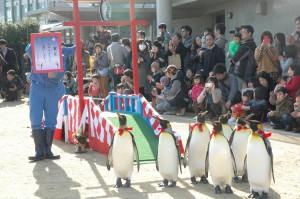 キングペンギンの新春パレード