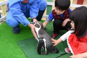 ペンギンタッチング2